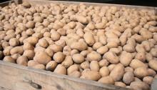 aardappelkist
